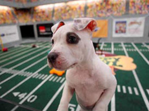 Puppy Bowl IX Recap