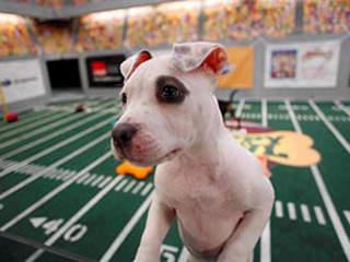 Puppy Bowl IX Recap