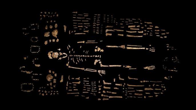 %27Missing+Link%27+in+Human+Evolution+Discovered