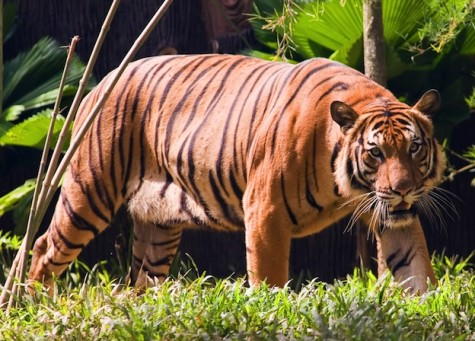 Florida zookeeper killed by tiger