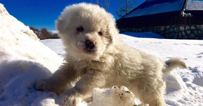 Puppies Rescued After an Avalanche in Italy