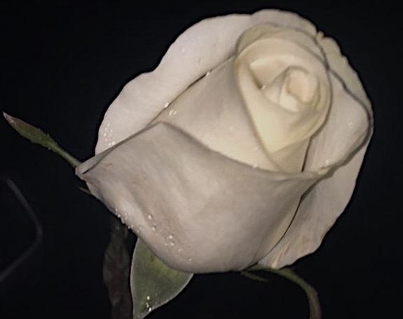 Self-Love: A Valentine