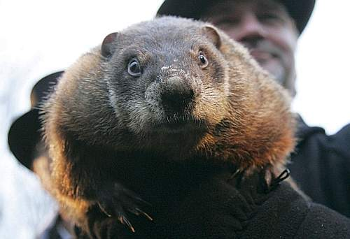 Weather prognosticating groundhog Punxsutawney Phil makes his annual prediction on Gobblers Knob in Punxsutawney, Pennsylvania, on the 123rd Groundhog Day, February 2, 2009. Phil saw his shadow, predicting six more weeks of winter. REUTERS/Jason Cohn (UNITED STATES)